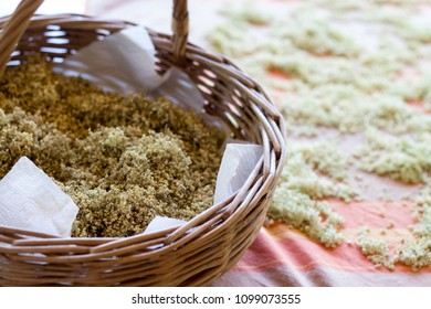 dried herbs of wild elder flowers - natural medicine