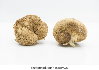 Dried hericium, an edible fleshy mushroom that resemble a icicle-like spines and grow on dead or dying wood. Its common names are monkey's head, lion's mane and bear's head and use for Chinese dishes.