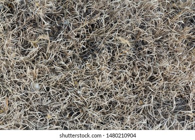 Dried hot Mediterranean natural grasses and flowers roadside