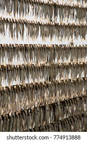 Dried lake fishes hanged to the sun, Lake Iseo, Lumbardy, Italy