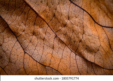 Dried leaf close up; fine details and very high-res for backgrounds.