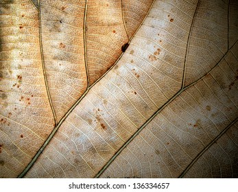 Dried leaf closeup
