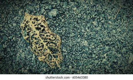 Dried leaf on concrete floor, Texture background
