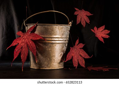Dried leaves from fall
