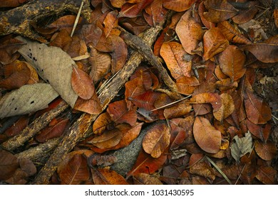 Dried leaves fall to the ground