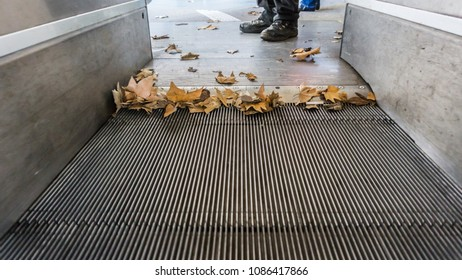 Dried leaves at the foot of the escalator.