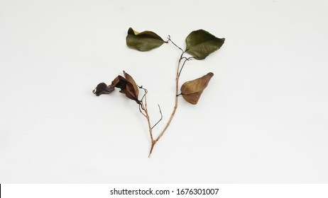 Dried leaves and twigs. Isolated on white background.