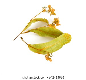 dried linden isolated on white background