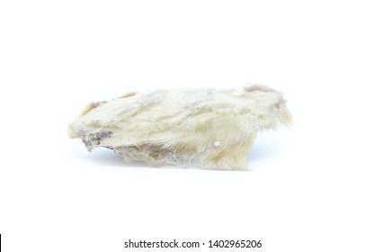 Dried mango seed isolated on white background