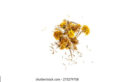 Dried marigold on white background.