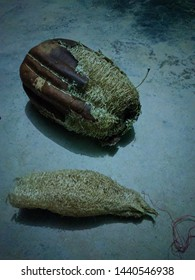 A dried, mature luffa fruit, used as loofah