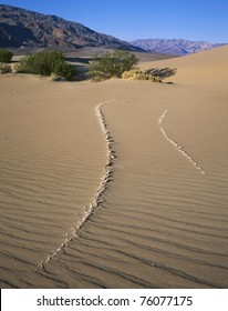 Dried Mud Poking Through The Sand And Looking Like Exposed Dinosaur Bones, Death Valley National Park, California, USA