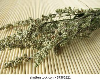 Dried Mugwort, Artemisia vulgaris