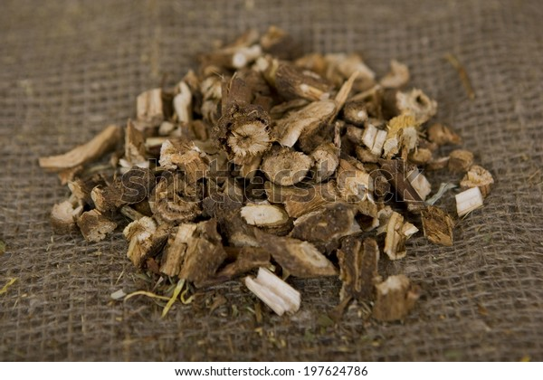 Dried natural wild chicory (dry medicinal herbs)