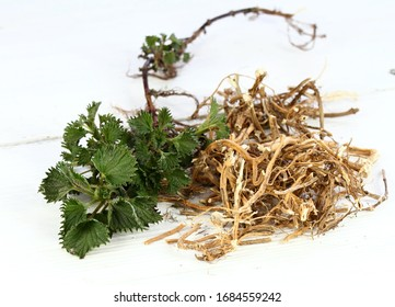 Dried nettle roots and fresh plant. Urtica diocica on white table. Nettle roots and leaves are good for hair growing and regeneration. Help against loosing hair.