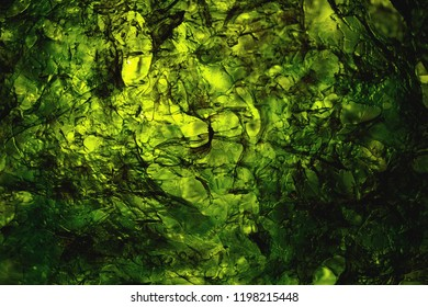 dried nori seaweed laminaria sheet illuminated texture
