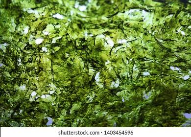 dried nori seaweed laminaria sheet illuminated texture