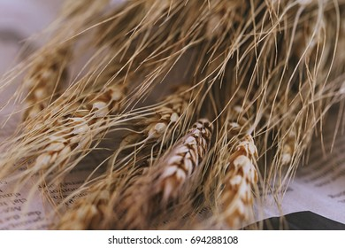 Dried oat plant closeup background