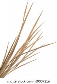 Dried ornamental grass clump. Very high-res. Clean edges, no shadows.