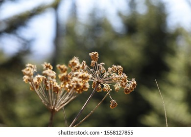 Dried out flowers. Brown and red vibrant bokeh background.
