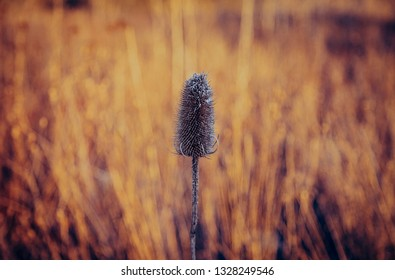 Dried out plant with a yellowish blurry background