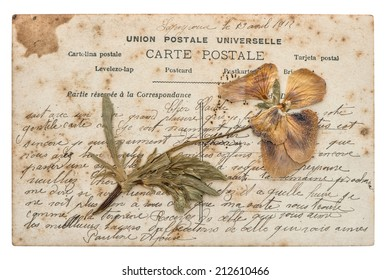dried pansy flower and old post card isolated on white background