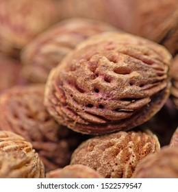Dried peach kernels in a closeup