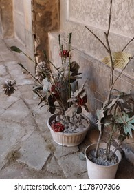 Dried plants in front of gravestones.