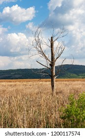 Dried poplar tree with a birdhouse at the Dragoman natural karst Wetland in Sofia Province, Bulgaria - the biggest Bulgarian natural karst wetland and protected sanctuary for birds