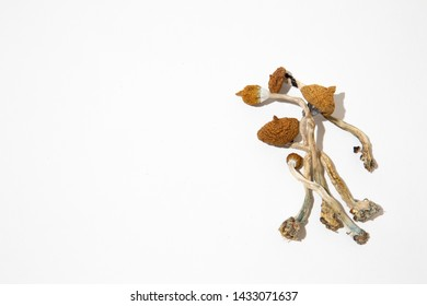 Psilocybe Mushrooms Images, Stock Photos & Vectors