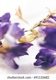Dried purple and yellow flowers on white background.