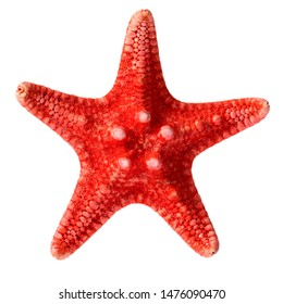 Dried red sea star isolated on white background, close up