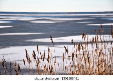 Dried reeds by an icy coast with patterns on the ice