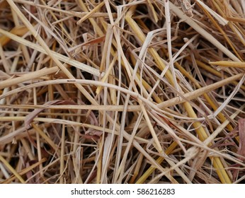 dried rice straw texture
