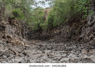 A dried up river creek on a late summer afternoon in south India.