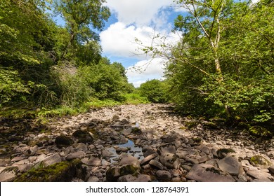 A dried up riverbed in a forest