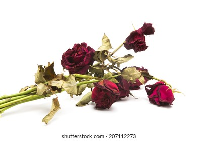 A dried rose depicted on a white background.