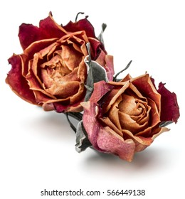dried rose flower head isolated on white background cutout.