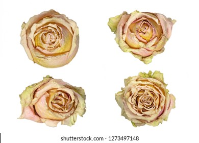 Dried rose heads on white background, closeup shot