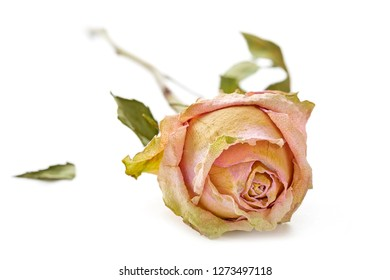 Dried rose lying on a white surface