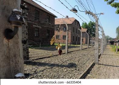 dried rose on a prison wired fence, photo taken in Auswitz, Oswiecim, Poland