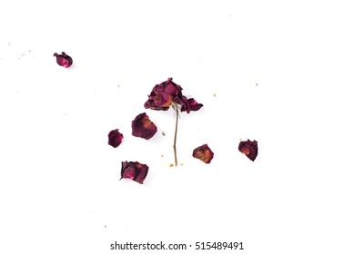 The dried rose petals are falling (white background), represent of the heart broken, lost or disappoint
