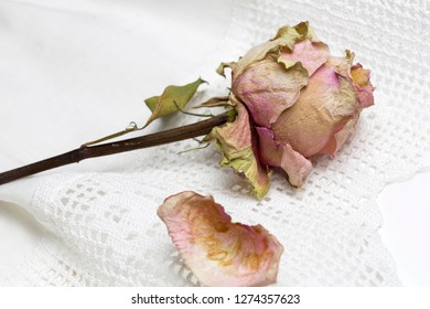 Dried rose with petals lying on a white doily