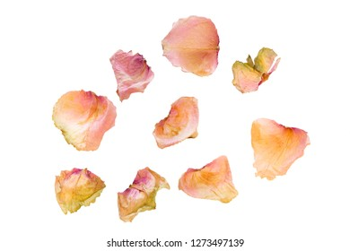 Dried rose petals on white background, closeup shot
