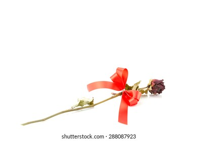 Dried rose with red ribbon isolated on white.