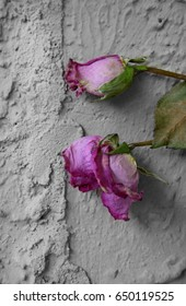 Dried Roses on Stucco Wall