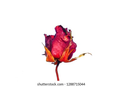 Dried roses on a white background