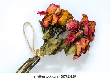 Dried roses on white background