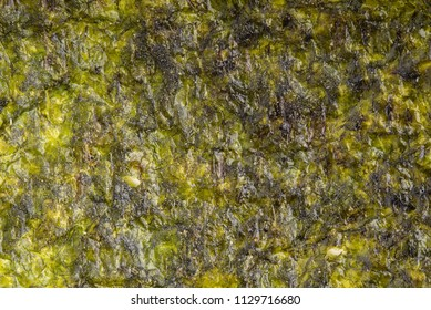 Dried seaweed sheet background. Closeup dry nori japanese food texture. top view.