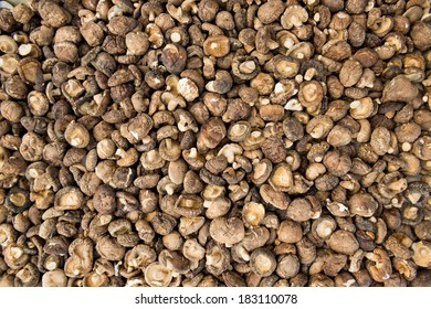 Dried shiitake mushroom (Lentinula edodes)